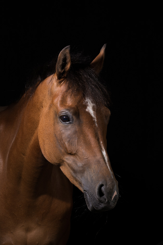 Pony portret fotografie studio shoot
