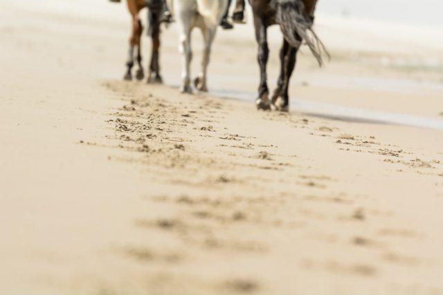 Ponies op het strand van Renesse, Nederland, zomer 2016